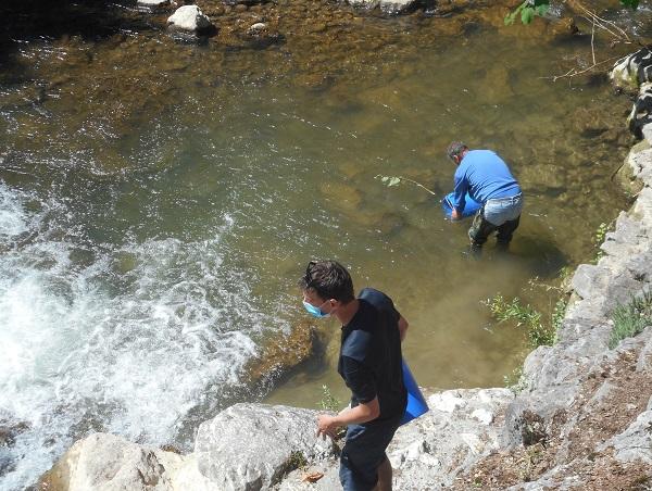 déversement-truites-lacustres-en-rivières-aix-les-bains